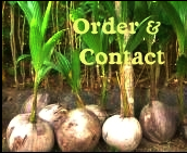 Order and Contact